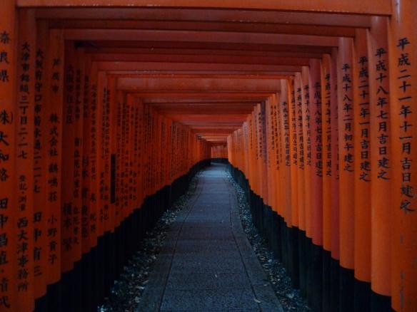 Interminable allée de torii.