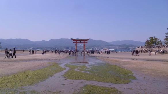 Début de remontée de marée, nous sommes arrivés à temps pour aller jusqu'au pied du torii.